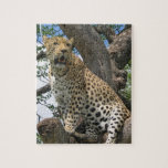 Leopard in Tree Puzzle