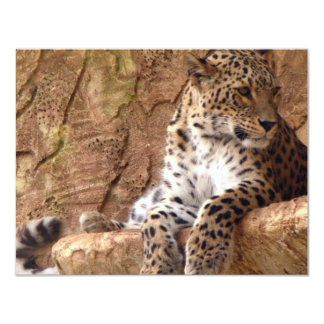 Leopard Invitation