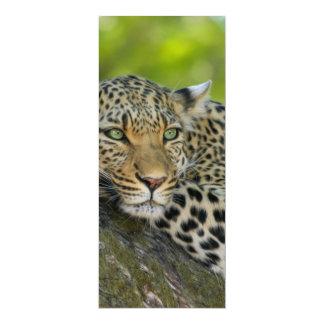 Leopard 4x9.25 Paper Invitation Card