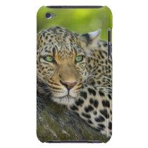 Leopard iPod Case-Mate Case