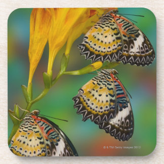 Leopard Lacewing tropical butterflies (Cethosia Beverage Coaster