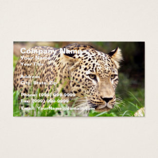 Leopard Looking at his Prey Business Card
