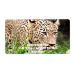 Leopard Looking at his Prey Custom Shipping Label