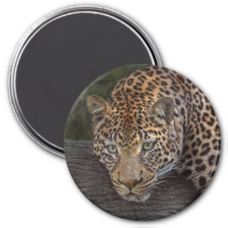 Leopard Lounging 3 Inch Round Magnet