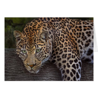 Leopard Lounging Card