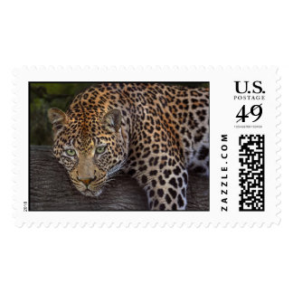 Leopard Lounging Postage Stamp