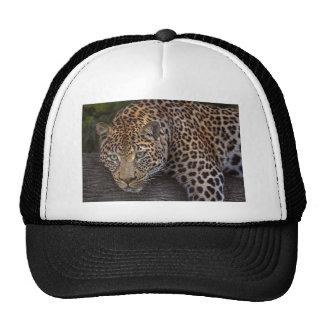 Leopard Lounging Trucker Hat