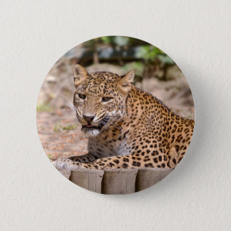 Leopard lying button