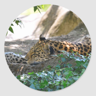 Leopard lying on rock classic round sticker