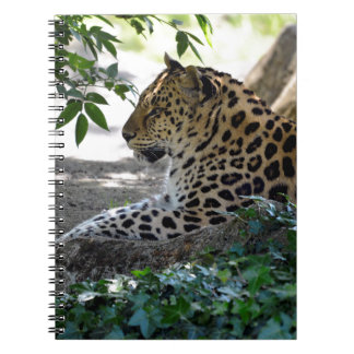 Leopard lying on rock notebook