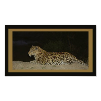 Leopard lying on sand bank poster