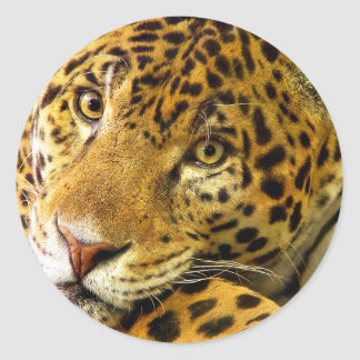 Leopard Macro Portrait Classic Round Sticker