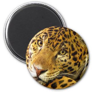 Leopard Macro Portrait Magnet