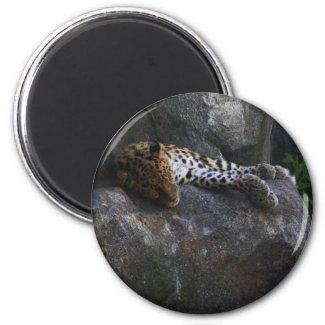 Leopard Magnet magnet