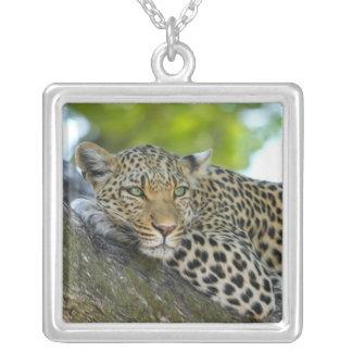 Leopard Jewelry