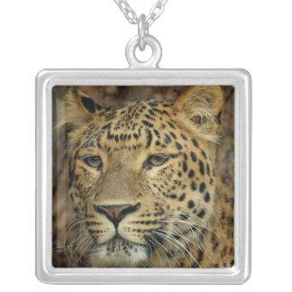 Leopard Necklaces