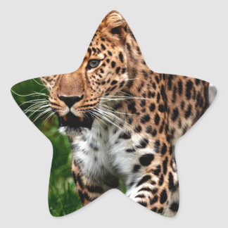 Leopard on the Prowl Cool Animal Design Star Sticker