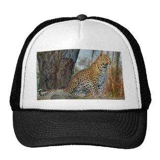 Leopard on Watch Ball Cap Trucker Hat