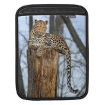 Leopard on Watch Sleeve For iPads