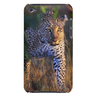 Leopard (Panthera Pardus) as seen in the Masai Barely There iPod Case