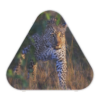 Leopard (Panthera Pardus) as seen in the Masai Bluetooth Speaker