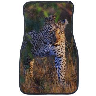 Leopard (Panthera Pardus) as seen in the Masai Car Mat