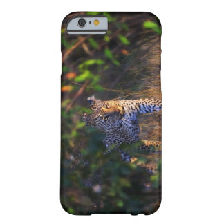 Leopard (Panthera Pardus) as seen in the Masai Barely There iPhone 6 Case