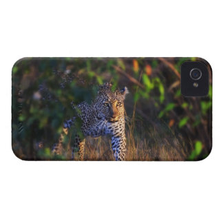 Leopard (Panthera Pardus) as seen in the Masai iPhone 4 Case-Mate Case