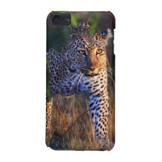 Leopard (Panthera Pardus) as seen in the Masai iPod Touch (5th Generation) Case