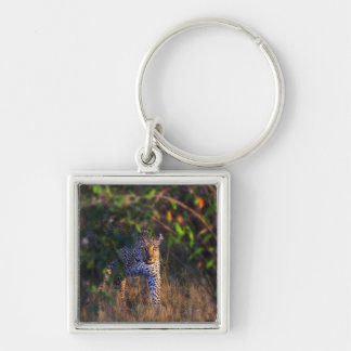 Leopard (Panthera Pardus) as seen in the Masai Keychain