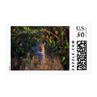 Leopard (Panthera Pardus) as seen in the Masai Postage