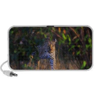 Leopard (Panthera Pardus) as seen in the Masai Mp3 Speaker