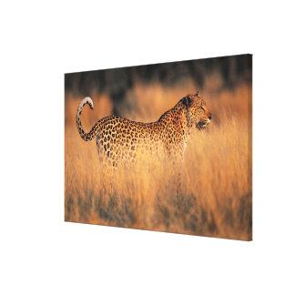 Leopard (Panthera pardus) Canvas Print