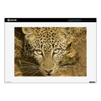 Leopard, Panthera pardus, drinking from a Skin For Laptop