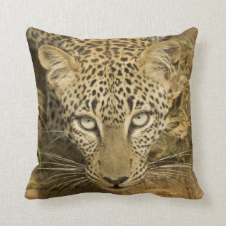 Leopard, Panthera pardus, drinking from a Throw Pillow