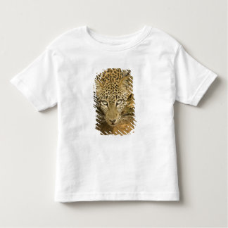 Leopard, Panthera pardus, drinking from a Toddler T-shirt