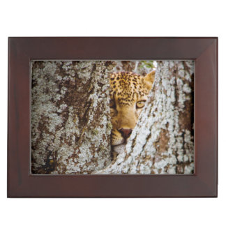 Leopard (Panthera Pardus) Hiding Behind Tree Memory Box