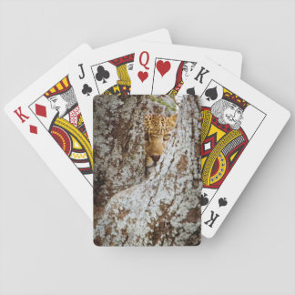 Leopard (Panthera Pardus) Hiding Behind Tree Deck Of Cards
