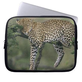 Leopard, (Panthera pardus), Kenya, Masai Mara Computer Sleeve