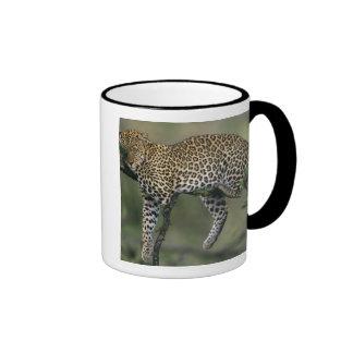 Leopard, (Panthera pardus), Kenya, Masai Mara Ringer Coffee Mug