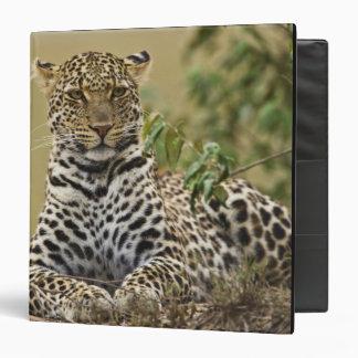 Leopard, Panthera pardus. Masai Mara Game Binders