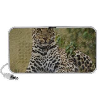 Leopard, Panthera pardus. Masai Mara Game Laptop Speaker