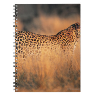 Leopard (Panthera pardus) Notebook