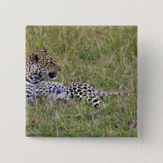 Leopard (Panthera pardus) resting in grass, Button
