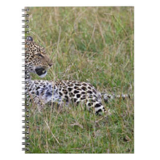 Leopard (Panthera pardus) resting in grass, Notebook