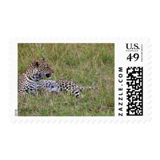 Leopard (Panthera pardus) resting in grass, Postage