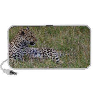 Leopard (Panthera pardus) resting in grass, Portable Speaker