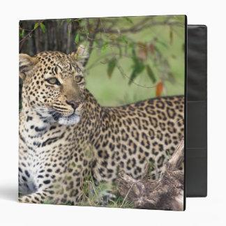 Leopard Panthera pardus) resting, Masai Mara 3 Ring Binder