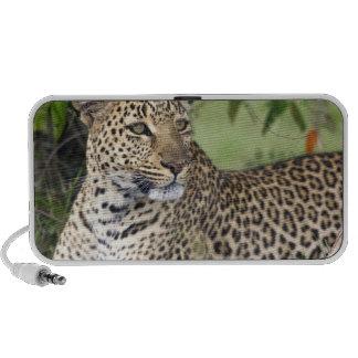 Leopard Panthera pardus) resting, Masai Mara PC Speakers