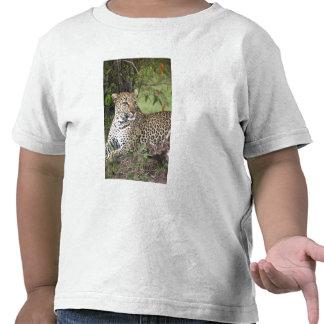Leopard Panthera pardus) resting, Masai Mara T-shirts